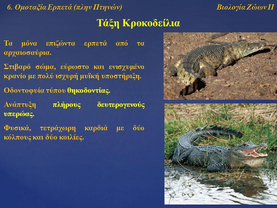 Τάξη Κροκοδείλια Βιολογία Ζώων ΙΙ6.