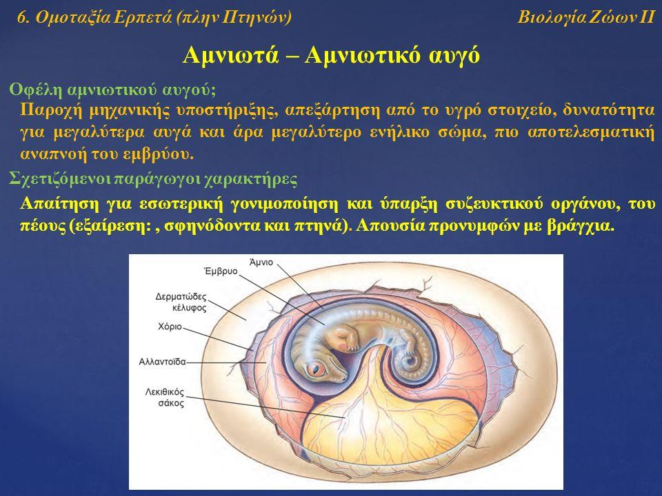Βιολογία Ζώων ΙΙ Αμνιωτά – Αμνιωτικό αυγό Οφέλη αμνιωτικού αυγού; 6.