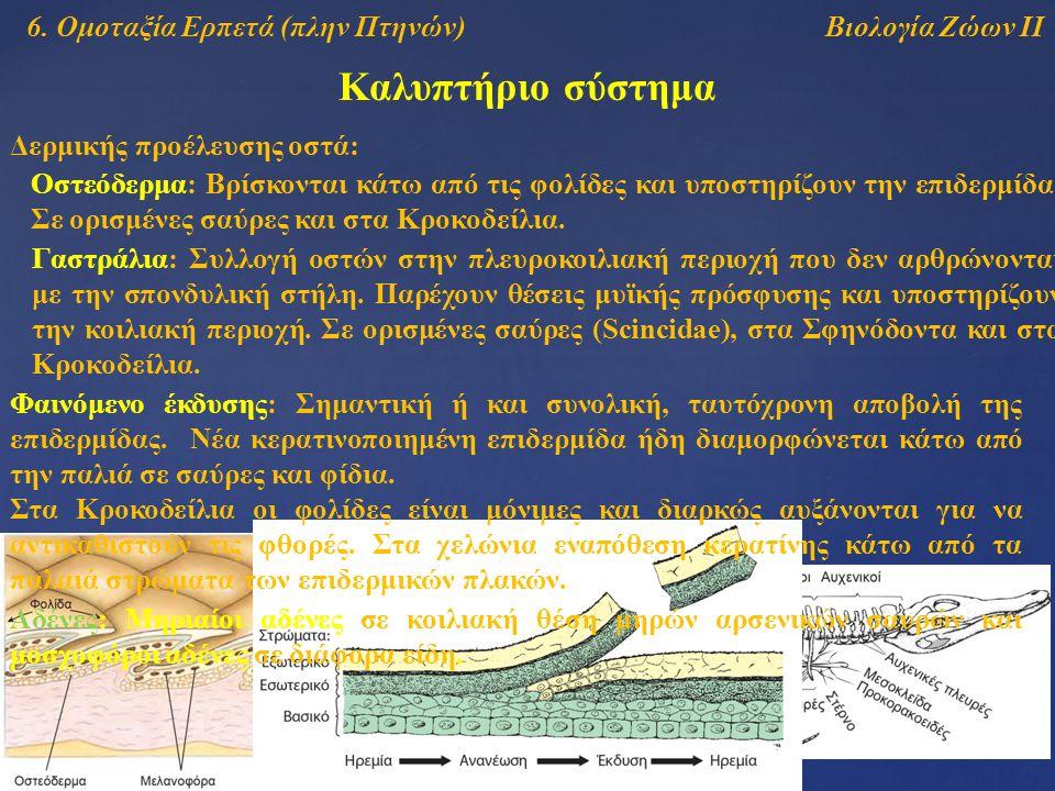 Βιολογία Ζώων ΙΙ Καλυπτήριο σύστημα 6.