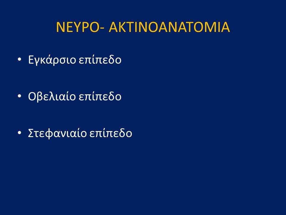ΝΕΥΡΟ- AKTINOΑΝΑΤΟΜΙΑ Εγκάρσιο επίπεδο Οβελιαίο επίπεδο Στεφανιαίο επίπεδο