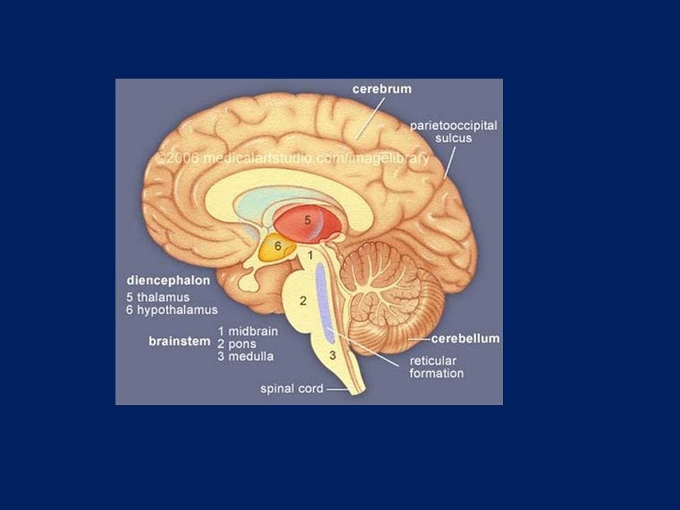 ΕΝΔΟΚΡΑΝΙΑΚΗ ΑΙΜΟΡΡΑΓΙΑ-ΣΤΟΧΟΙ ΑΠΕΙΚΟΝΙΣΗΣ Ανίχνευση Εντόπιση Καθορισμός ηλικίας Αιτιολόγηση Διάγνωση-Θεραπεία-πρόγνωση