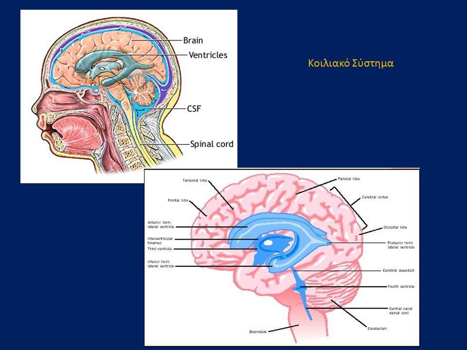 Οβελιαίο επίπεδο Μεσολόβιο (γόνυ) Διάμεση μάζα υποθάλαμος Οπτικό χίασμα υπόφυση μαστίο