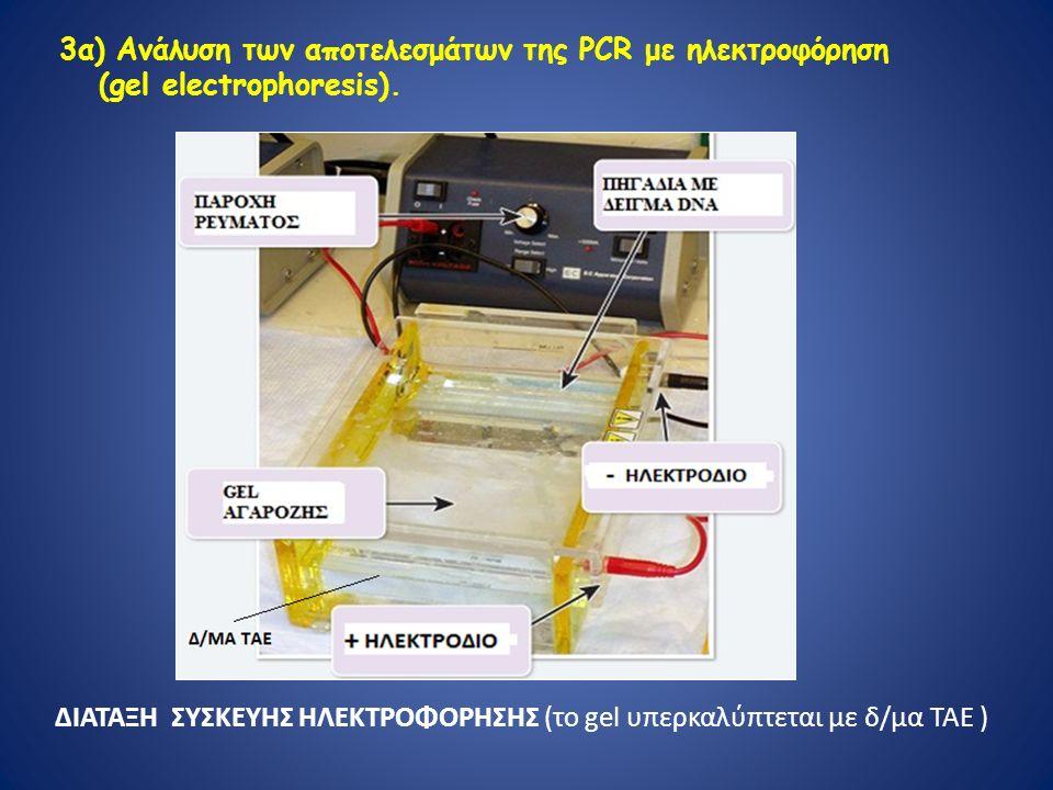 3α) Ανάλυση των αποτελεσμάτων της PCR με ηλεκτροφόρηση (gel electrophoresis).