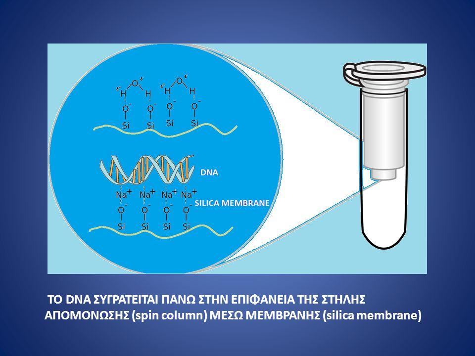 ΤΟ DNA ΣΥΓΡΑΤΕΙΤΑΙ ΠΑΝΩ ΣΤΗΝ ΕΠΙΦΑΝΕΙΑ ΤΗΣ ΣΤΗΛΗΣ ΑΠΟΜΟΝΩΣΗΣ (spin column) ΜΕΣΩ ΜΕΜΒΡΑΝΗΣ (silica membrane)
