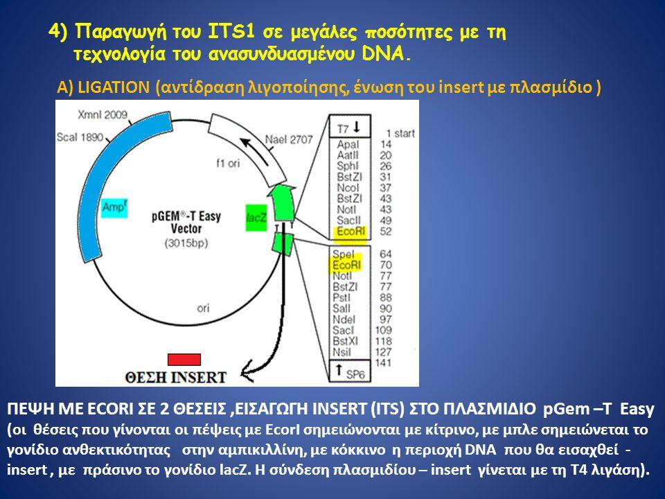 4) Παραγωγή του ΙΤS1 σε μεγάλες ποσότητες με τη τεχνολογία του ανασυνδυασμένου DNA.
