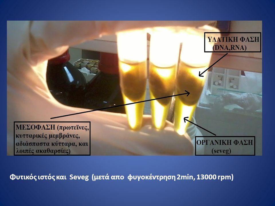 Φυτικός ιστός και Seveg (μετά απο φυγοκέντρηση 2min, 13000 rpm)