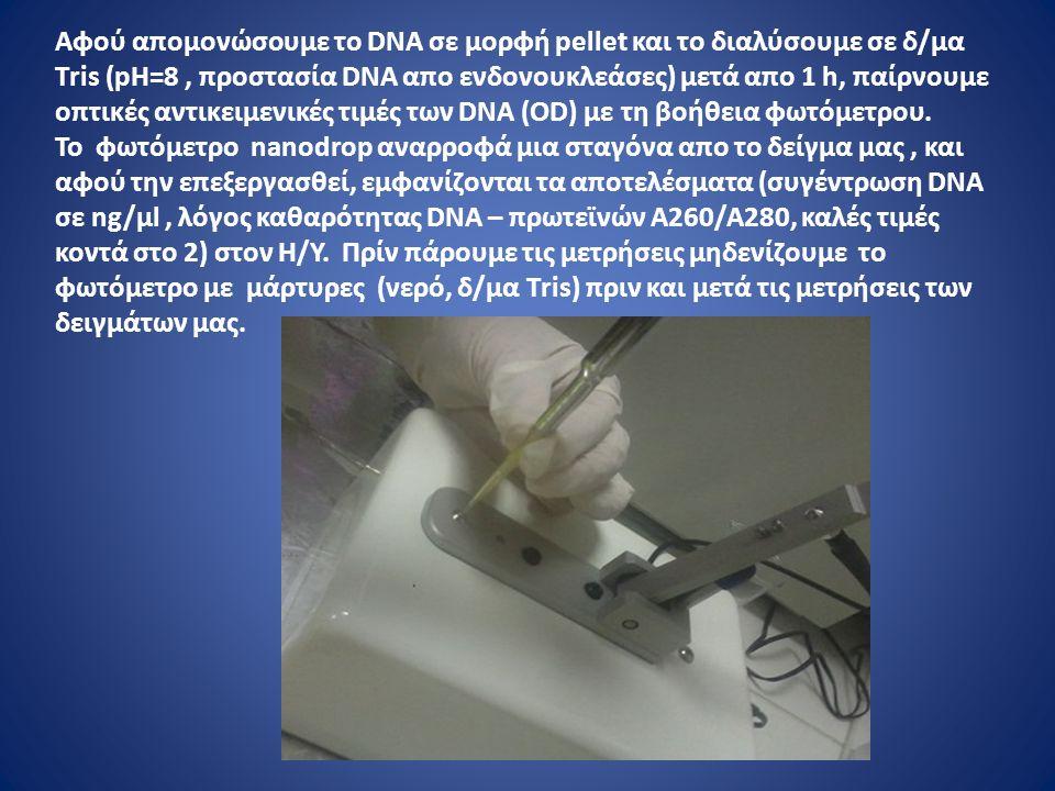 Αφού απομονώσουμε το DNA σε μορφή pellet και το διαλύσουμε σε δ/μα Τris (pH=8, προστασία DNA απο ενδονουκλεάσες) μετά απο 1 h, παίρνουμε οπτικές αντικειμενικές τιμές των DNA (OD) με τη βοήθεια φωτόμετρου.