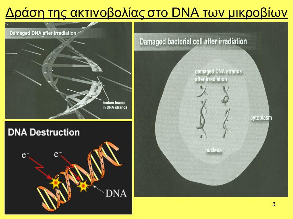3 Δράση της ακτινοβολίας στο DNA των μικροβίων