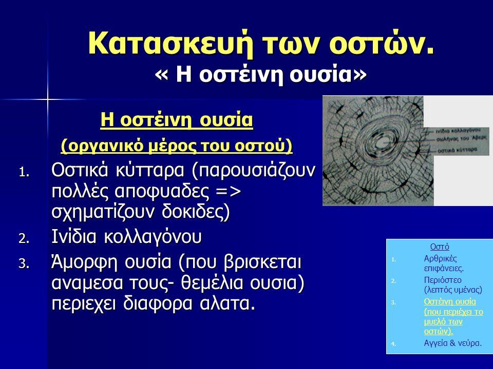 Κατασκευή των οστών. « Η οστέινη ουσία» Οστό 1. Αρθρικές επιφάνειες. 2. Περιόστεο (λεπτός υμένας) 3. Οστέινη ουσία (που περιέχει το μυελό των οστών).