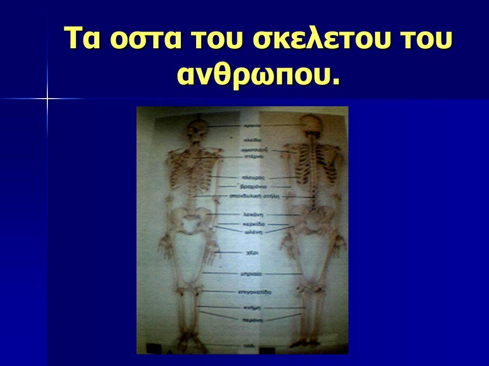 Τα οστα του σκελετου του ανθρωπου.