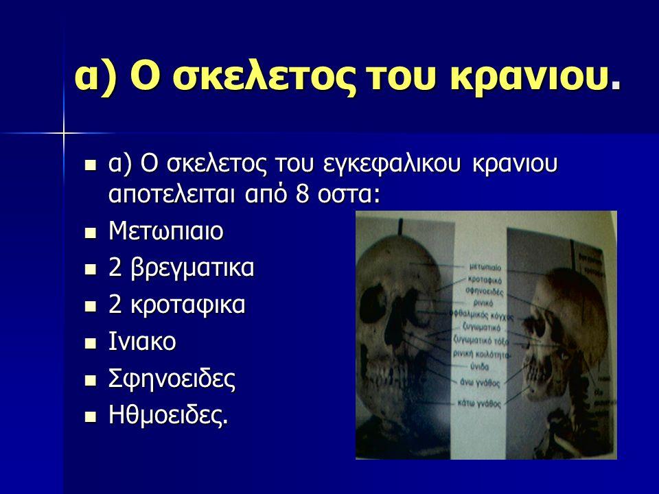 α) Ο σκελετος του κρανιου. α) Ο σκελετος του εγκεφαλικου κρανιου αποτελειται από 8 οστα: α) Ο σκελετος του εγκεφαλικου κρανιου αποτελειται από 8 οστα: