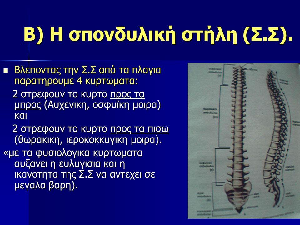 Β) Η σπονδυλική στήλη (Σ.Σ). Βλεποντας την Σ.Σ από τα πλαγια παρατηρουμε 4 κυρτωματα: Βλεποντας την Σ.Σ από τα πλαγια παρατηρουμε 4 κυρτωματα: 2 στρεφ