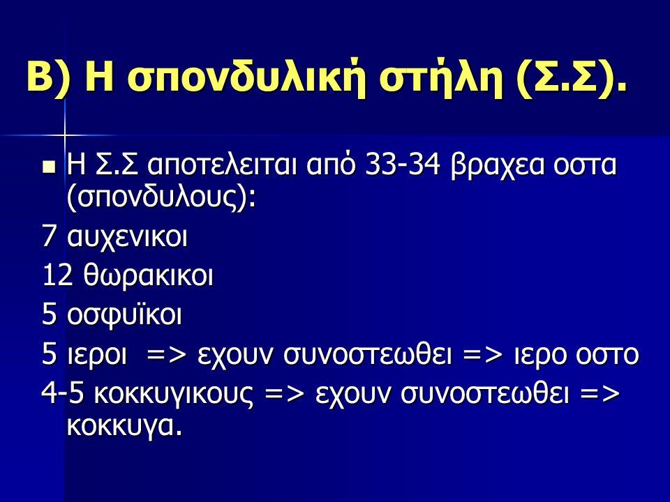 Β) Η σπονδυλική στήλη (Σ.Σ). Η Σ.Σ αποτελειται από 33-34 βραχεα οστα (σπονδυλους): Η Σ.Σ αποτελειται από 33-34 βραχεα οστα (σπονδυλους): 7 αυχενικοι 1