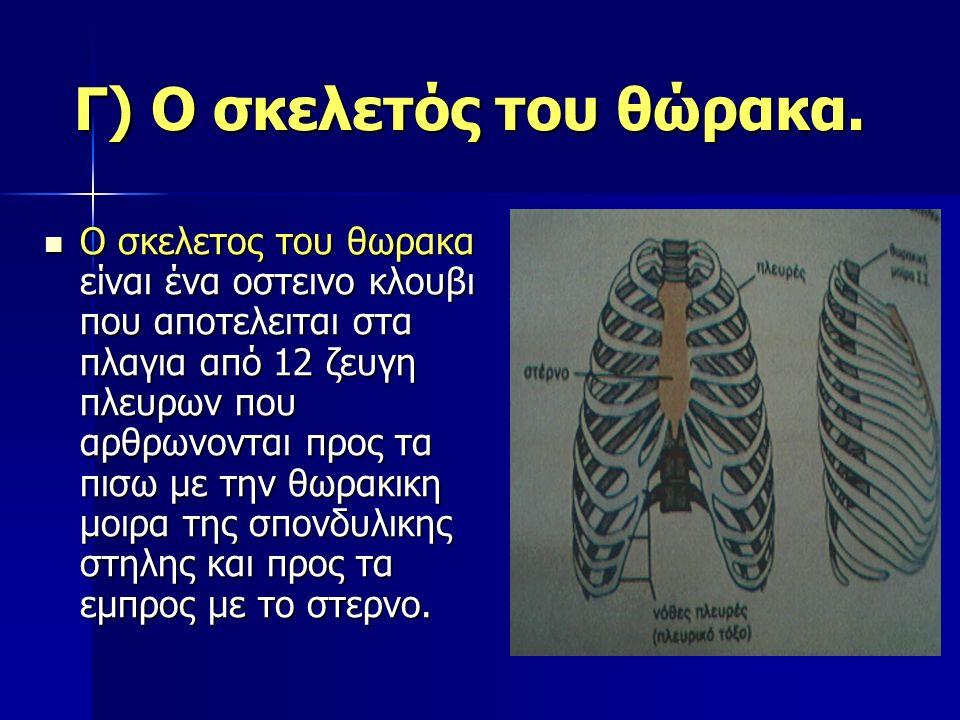 Γ) Ο σκελετός του θώρακα. Ο σκελετος του θωρακα είναι ένα οστεινο κλουβι που αποτελειται στα πλαγια από 12 ζευγη πλευρων που αρθρωνονται προς τα πισω