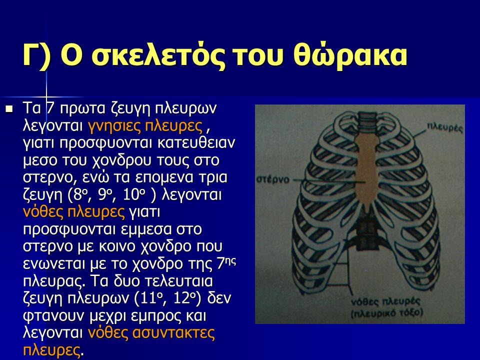 Γ) Ο σκελετός του θώρακα Τα 7 πρωτα ζευγη πλευρων λεγονται γνησιες πλευρες, γιατι προσφυονται κατευθειαν μεσο του χονδρου τους στο στερνο, ενώ τα επομενα τρια ζευγη (8 ο, 9 ο, 10 ο ) λεγονται νόθες πλευρες γιατι προσφυονται εμμεσα στο στερνο με κοινο χονδρο που ενωνεται με το χονδρο της 7 ης πλευρας.