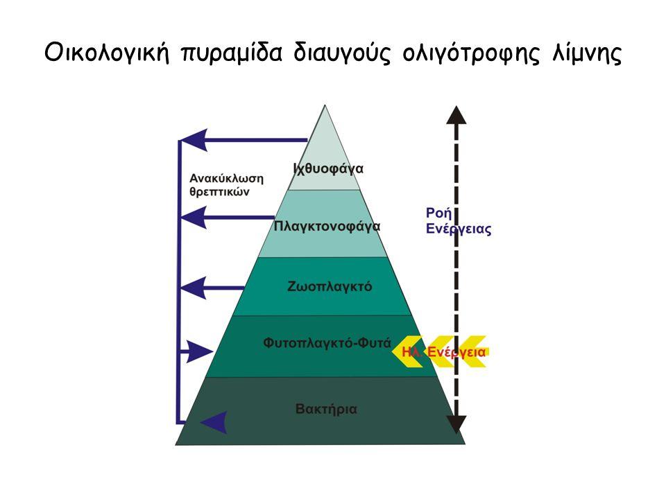 Οικολογική πυραμίδα διαυγούς ολιγότροφης λίμνης