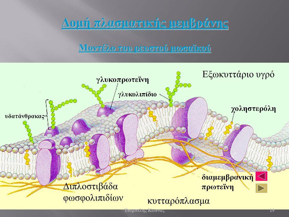 γλυκοπρωτεϊνη γλυκολιπίδιο υδατάνθρακας χοληστερόλη διαμεμβρανική πρωτεϊνη κυτταρόπλασμα Εξωκυττάριο υγρό Διπλοστιβάδα φωσφολιπιδίων Δομή πλασματικής μεμβράνης Μοντέλο του ρευστού μωσαϊκού 19 Τσερπέλης Κώστας