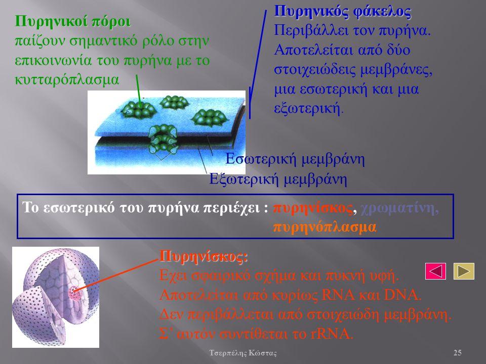 Πυρηνίσκος: Εχει σφαιρικό σχήμα και πυκνή υφή. Αποτελείται από κυρίως RNA και DNA.