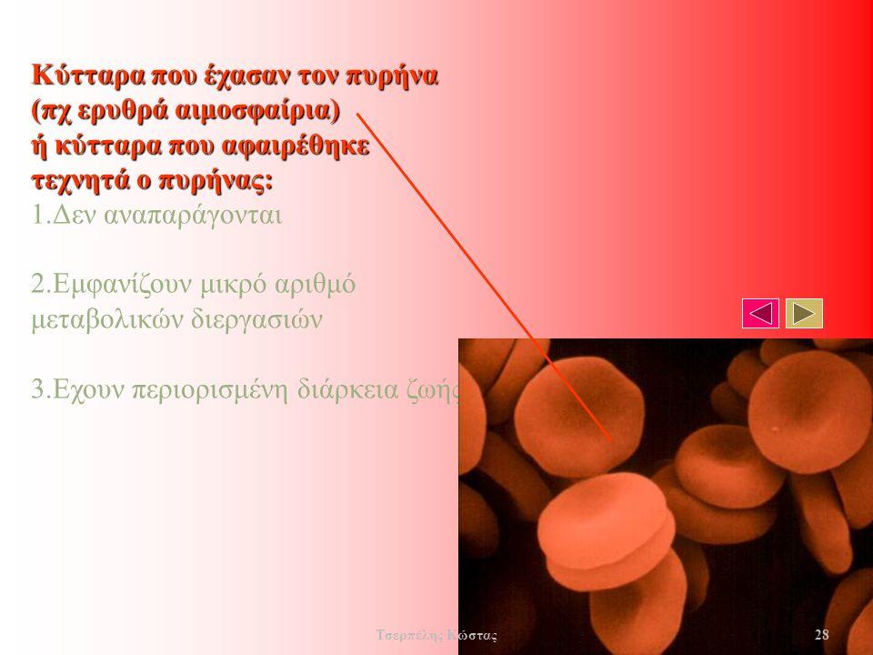 Κύτταρα που έχασαν τον πυρήνα (πχ ερυθρά αιμοσφαίρια) ή κύτταρα που αφαιρέθηκε τεχνητά ο πυρήνας: 1.Δεν αναπαράγονται 2.Εμφανίζουν μικρό αριθμό μεταβολικών διεργασιών 3.Εχουν περιορισμένη διάρκεια ζωής.