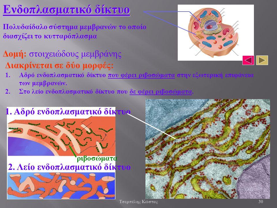 Διακρίνεται σε δύο μορφές: 1.Αδρό ενδοπλασματικό δίκτυο που φέρει ριβοσώματα στην εξωτερική επιφάνεια των μεμβρανών.