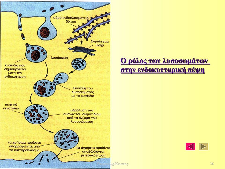 Ο ρόλος των λυσοσωμάτων Ο ρόλος των λυσοσωμάτων στην ενδοκυτταρική πέψη στην ενδοκυτταρική πέψη 36 Τσερπέλης Κώστας