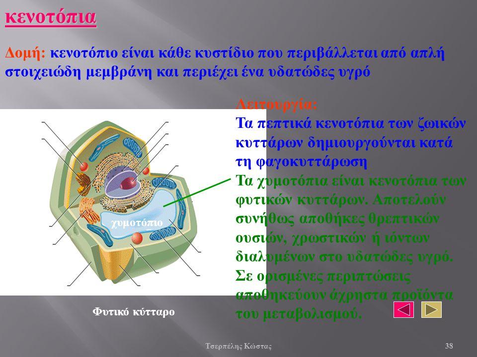 κενοτόπια Δομή: κενοτόπιο είναι κάθε κυστίδιο που περιβάλλεται από απλή στοιχειώδη μεμβράνη και περιέχει ένα υδατώδες υγρό Λειτουργία: Τα πεπτικά κενοτόπια των ζωικών κυττάρων δημιουργούνται κατά τη φαγοκυττάρωση Τα χυμοτόπια είναι κενοτόπια των φυτικών κυττάρων.