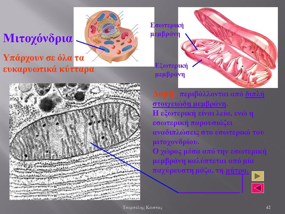 Μιτοχόνδρια Δομή: περιβάλλονται από διπλή στοιχειώδη μεμβράνη.