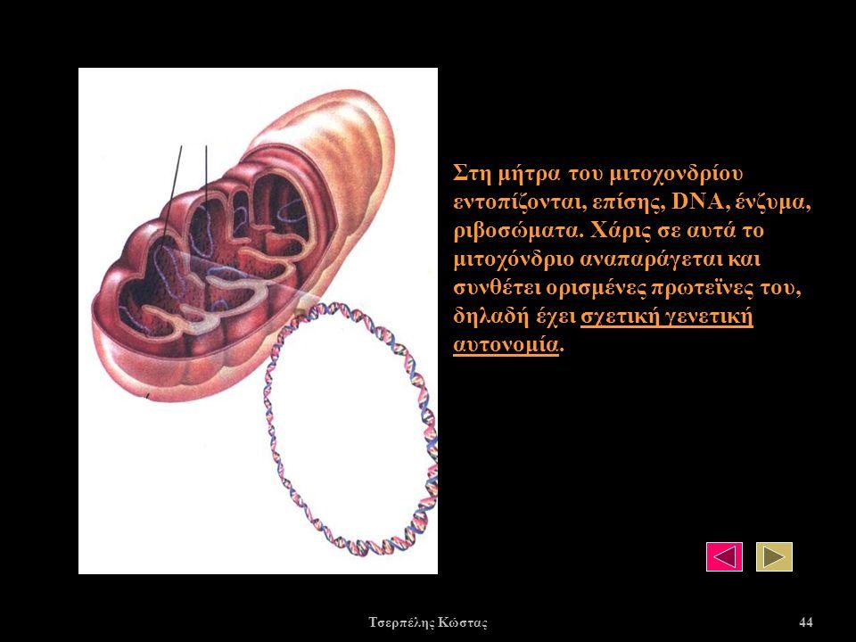 Στη μήτρα του μιτοχονδρίου εντοπίζονται, επίσης, DNA, ένζυμα, ριβοσώματα.