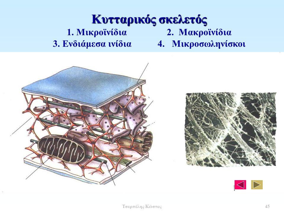 Κυτταρικός σκελετός 1. Μικροϊνίδια 2. Μακροϊνίδια 3.