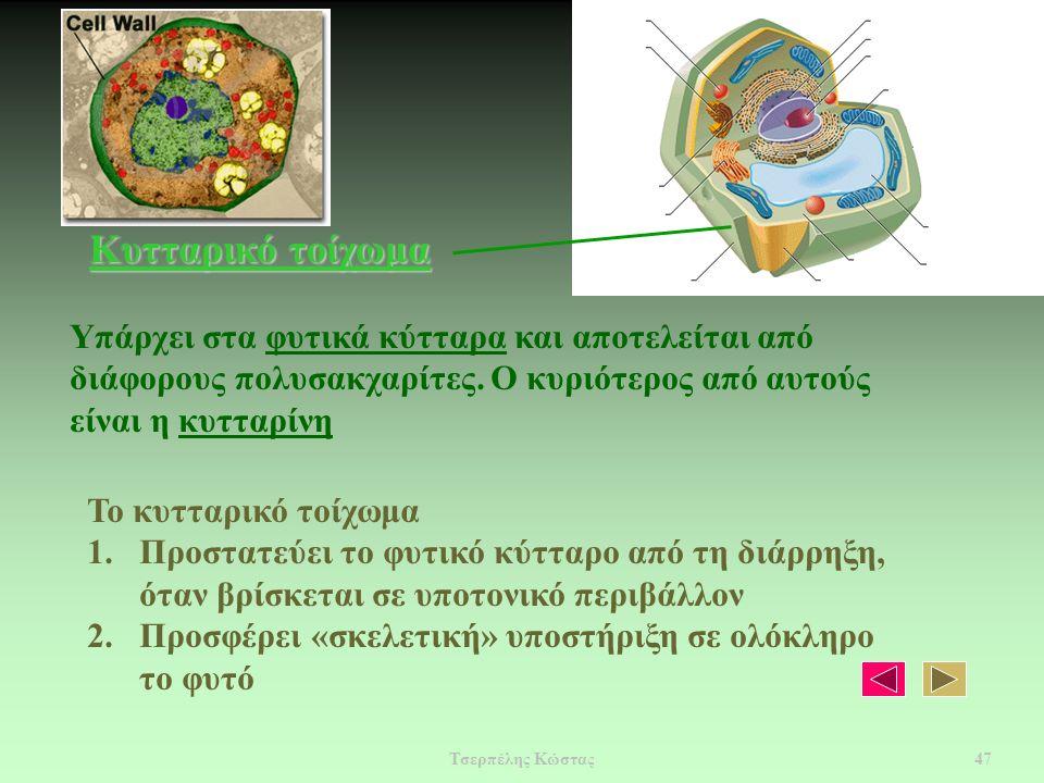 Κυτταρικό τοίχωμα Υπάρχει στα φυτικά κύτταρα και αποτελείται από διάφορους πολυσακχαρίτες.