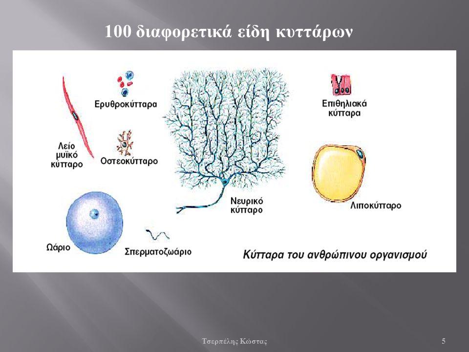 Τσερπέλης Κώστας 5 100 διαφορετικά είδη κυττάρων