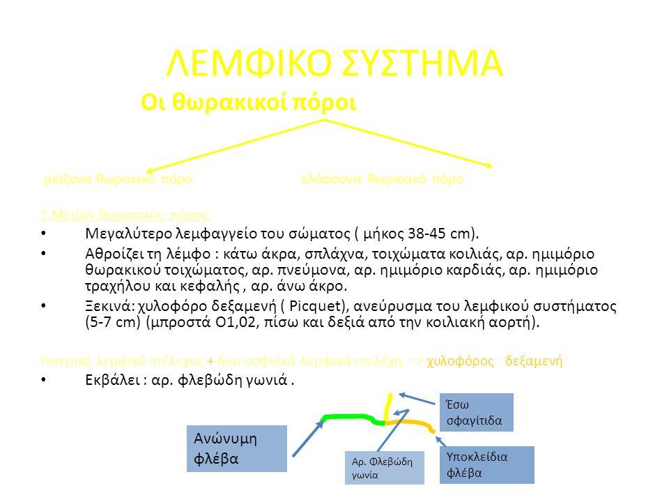 Οι θωρακικοί πόροι μείζονα θωρακικό πόρο ελάσσονα θωρακικό πόρο 1.Μειζον θωρακικός πόρος.