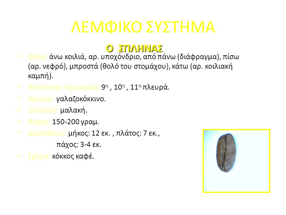 ΛΕΜΦΙΚΟ ΣΥΣΤΗΜΑ Θέση: άνω κοιλιά, αρ. υποχόνδριο, από πάνω (διάφραγμα), πίσω (αρ. νεφρό), μπροστά (θολό του στομάχου), κάτω (αρ. κοιλιακή καμπή). Αντί