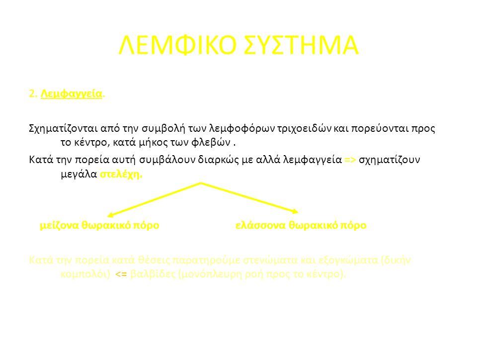 2. Λεμφαγγεία.