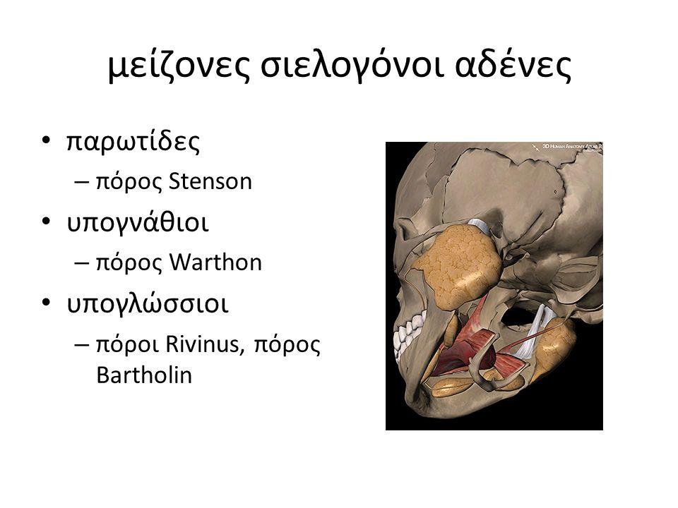 μείζονες σιελογόνοι αδένες παρωτίδες – πόρος Stenson υπογνάθιοι – πόρος Warthon υπογλώσσιοι – πόροι Rivinus, πόρος Bartholin