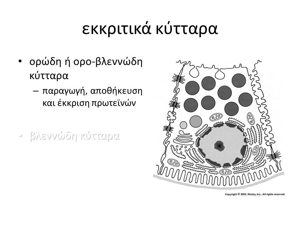 εκκριτικά κύτταρα