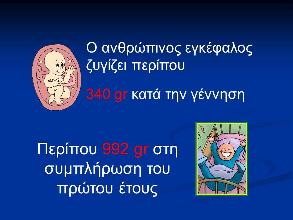 Ο ανθρώπινος εγκέφαλος ζυγίζει περίπου 340 gr κατά την γέννηση Περίπου 992 gr στη συμπλήρωση του πρώτου έτους