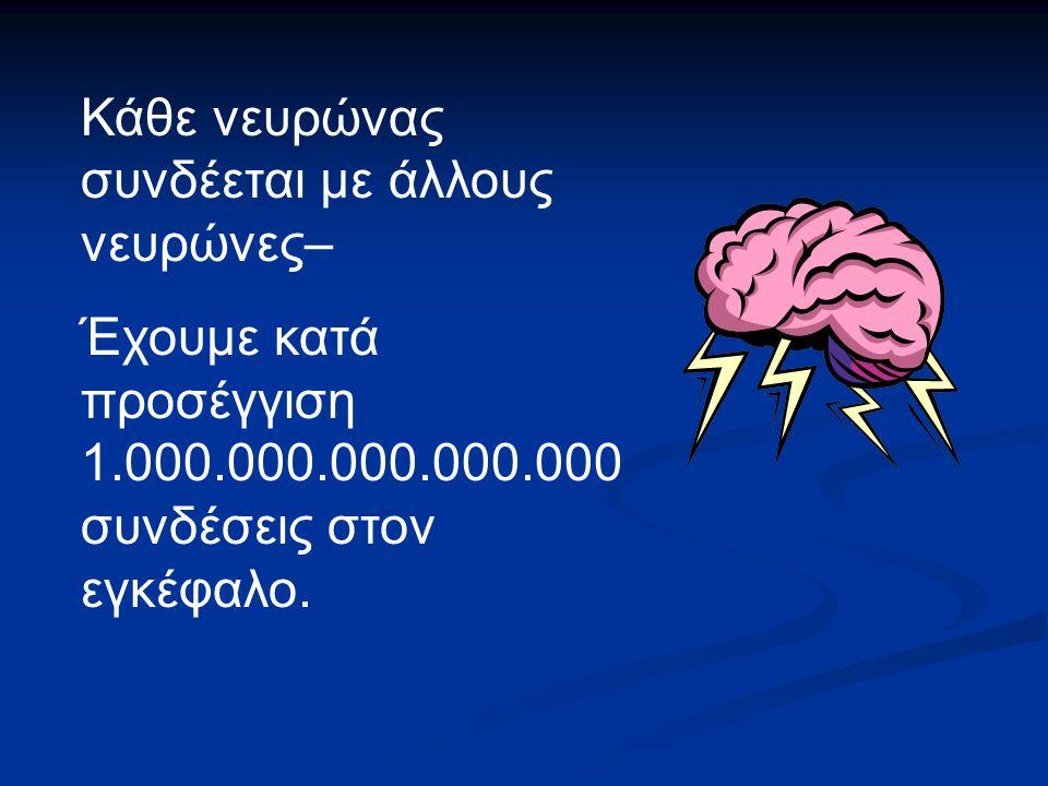 Κάθε νευρώνας συνδέεται με άλλους νευρώνες– Έχουμε κατά προσέγγιση 1.000.000.000.000.000 συνδέσεις στον εγκέφαλο.