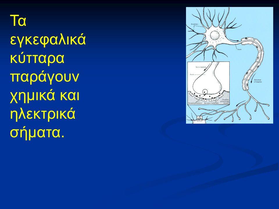 Τα εγκεφαλικά κύτταρα παράγουν χημικά και ηλεκτρικά σήματα.