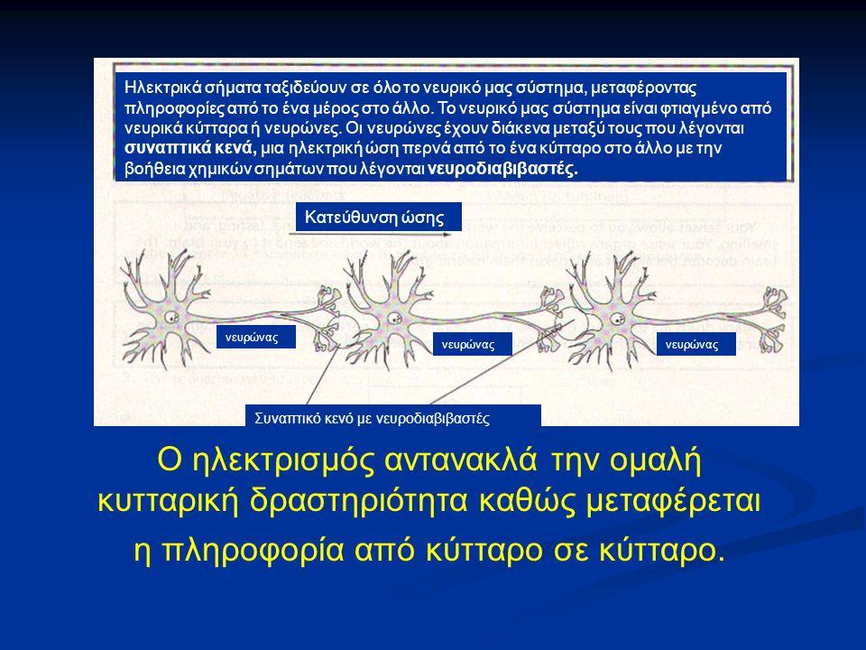 Ο ηλεκτρισμός αντανακλά την ομαλή κυτταρική δραστηριότητα καθώς μεταφέρεται η πληροφορία από κύτταρο σε κύτταρο.