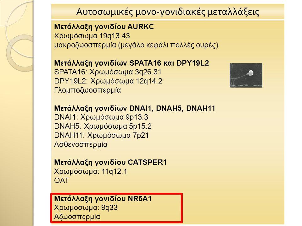 Αυτοσωμικές μονο-γονιδιακές μεταλλάξεις Μετάλλαξη γονιδίου AURKC Χρωμόσωμα 19q13.43 μακροζωοσπερμία (μεγάλο κεφάλι πολλές ουρές) Μετάλλαξη γονιδίων SPATA16 και DPY19L2 SPATA16: Χρωμόσωμα 3q26.31 DPY19L2: Χρωμόσωμα 12q14.2 Γλομποζωοσπερμία Μετάλλαξη γονιδίων DNAI1, DNAH5, DNAH11 DNAI1: Χρωμόσωμα 9p13.3 DNAH5: Χρωμόσωμα 5p15.2 DNAH11: Χρωμόσωμα 7p21 Ασθενοσπερμία Μετάλλαξη γονιδίου CATSPER1 Χρωμόσωμα: 11q12.1 ΟΑΤ Μετάλλαξη γονιδίου NR5A1 Χρωμόσωμα: 9q33 Αζωοσπερμία