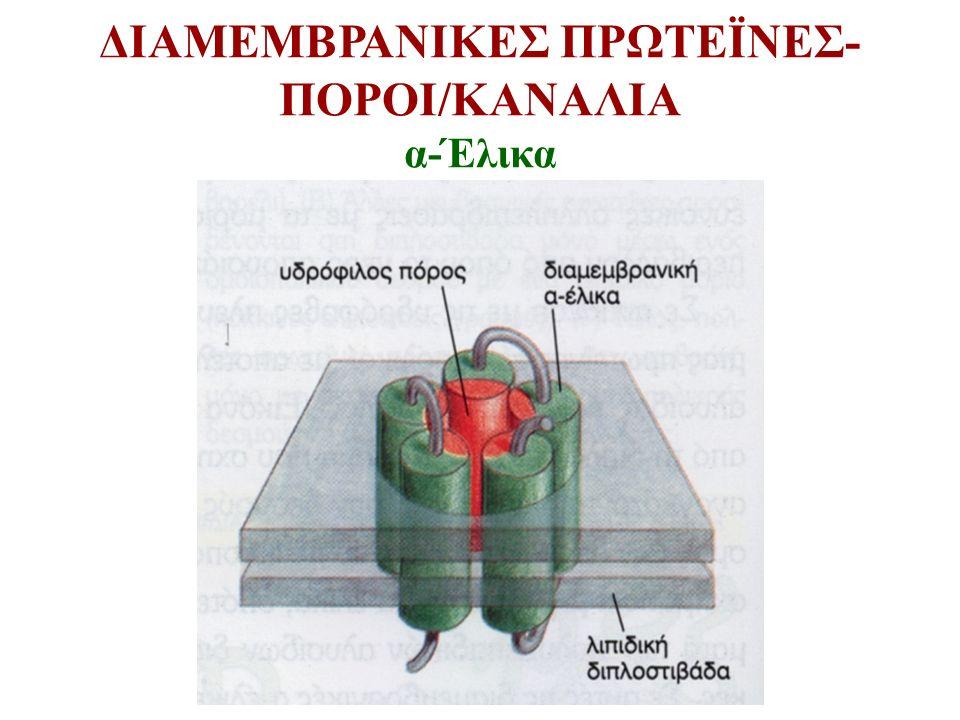 ΔΙΑΜΕΜΒΡΑΝΙΚΕΣ ΠΡΩΤΕΪΝΕΣ- ΠΟΡΟΙ/ΚΑΝΑΛΙΑ α-Έλικα