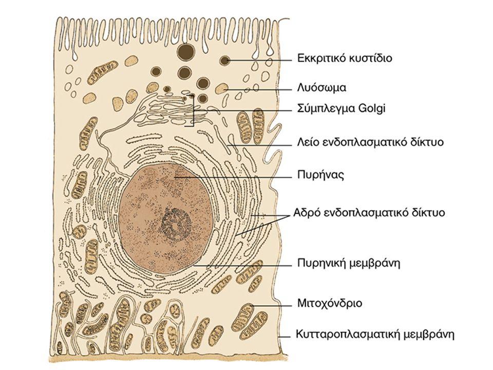 ΛΕΙΤΟΥΡΓΙΕΣ ΚΥΤΤΑΡΙΚΩΝ ΜΕΜΒΡΑΝΩΝ 1.Διαμερισματοποίηση κυττάρου 2.
