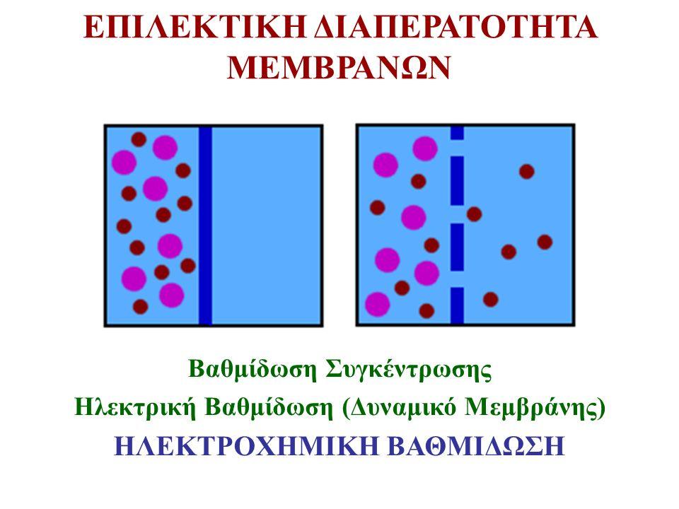 ΕΠΙΛΕΚΤΙΚΗ ΔΙΑΠΕΡΑΤΟΤΗΤΑ ΜΕΜΒΡΑΝΩΝ Βαθμίδωση Συγκέντρωσης Ηλεκτρική Βαθμίδωση (Δυναμικό Μεμβράνης) ΗΛΕΚΤΡΟΧΗΜΙΚΗ ΒΑΘΜΙΔΩΣΗ