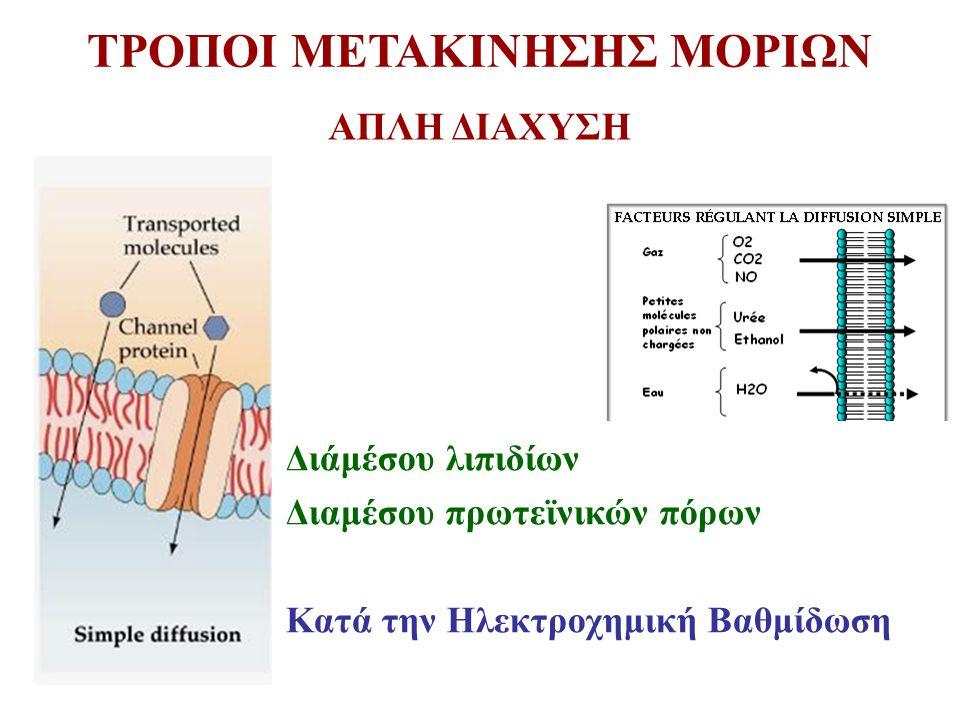 ΑΠΛΗ ΔΙΑΧΥΣΗ Διάμέσου λιπιδίων Διαμέσου πρωτεϊνικών πόρων Κατά την Ηλεκτροχημική Βαθμίδωση