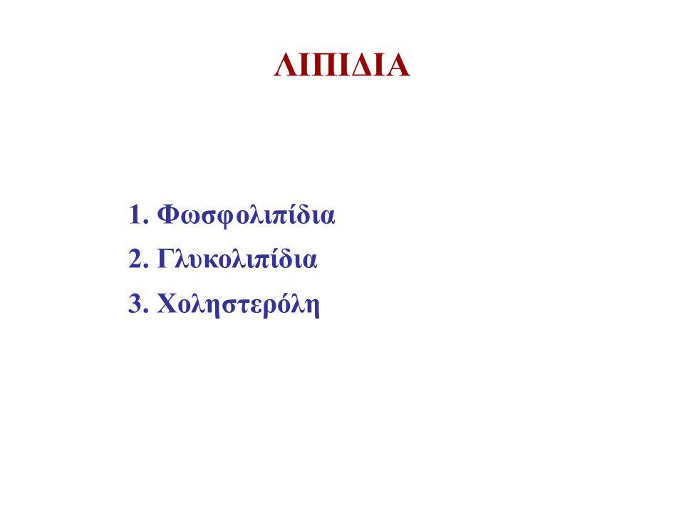 ΛΙΠΙΔΙΑ 1. Φωσφολιπίδια 2. Γλυκολιπίδια 3. Χοληστερόλη