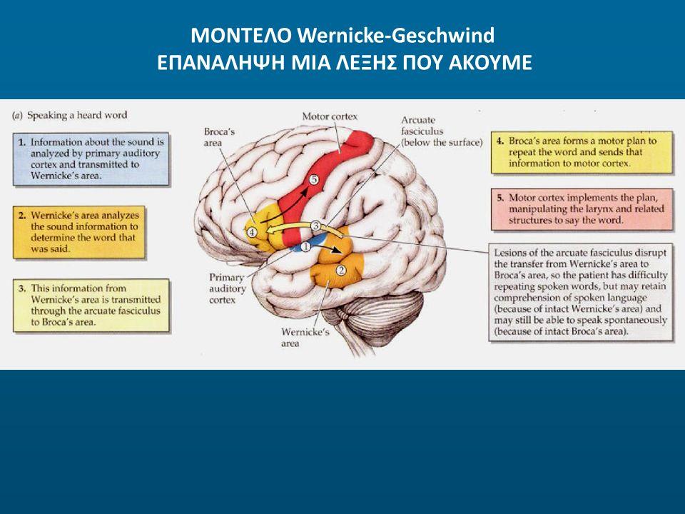 ΜΟΝΤΕΛΟ Wernicke-Geschwind ΕΠΑΝΑΛΗΨΗ ΜΙΑ ΛΕΞΗΣ ΠΟΥ ΑΚΟΥΜΕ