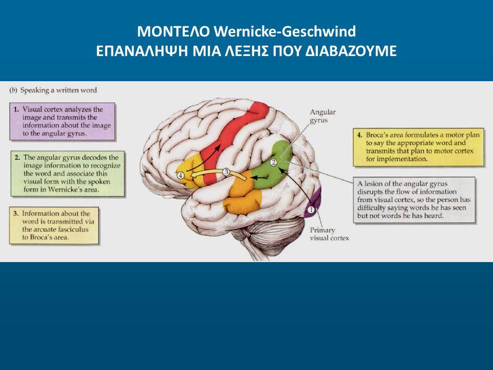 ΜΟΝΤΕΛΟ Wernicke-Geschwind ΕΠΑΝΑΛΗΨΗ ΜΙΑ ΛΕΞΗΣ ΠΟΥ ΔΙΑΒΑΖΟΥΜΕ