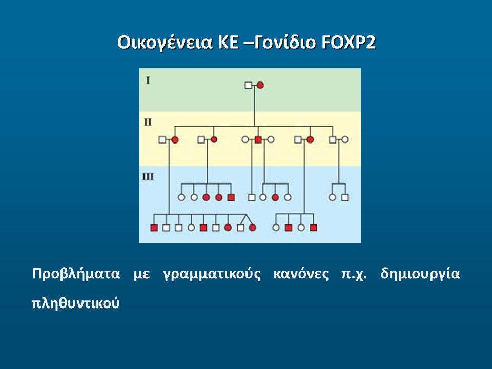 Οικογένεια ΚΕ –Γονίδιο FOXP2 Προβλήματα με γραμματικούς κανόνες π.χ. δημιουργία πληθυντικού