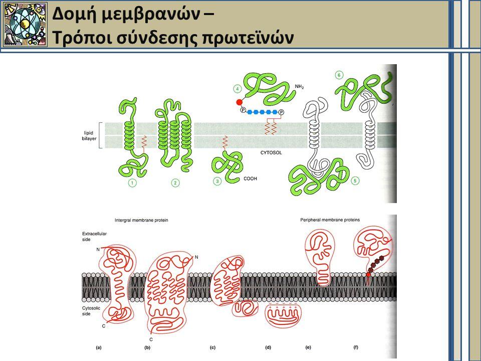 Δομή μεμβρανών – Τρόποι σύνδεσης πρωτεϊνών
